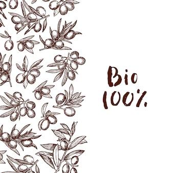 Mão desenhada ramos de oliveira com lugar para texto