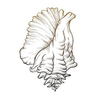 Mão desenhada seashell.