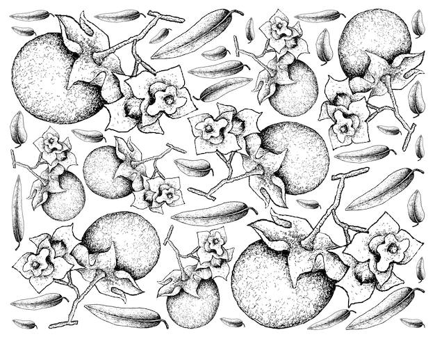 Mão desenhada sketch malabar ebony fruits