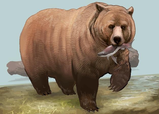 Mão desenhada urso