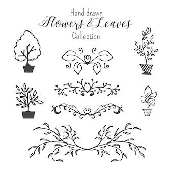 Mão desenhada vector flores e folhas coleção