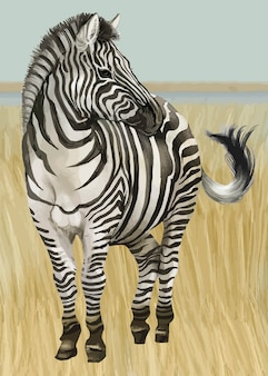 Mão desenhada zebra