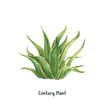 Mão, desenhado, americano, aloe, século, planta