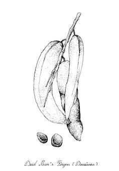 Mão, desenhado, de, dedos mortos homem, frutas, ligado, árvore, grupo