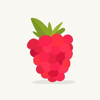 Mão, desenhado, framboesa, fruta, ilustração