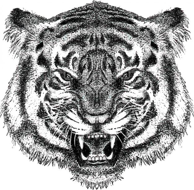 Mão, desenhado, retrato, de, rugindo, cabeça tigre