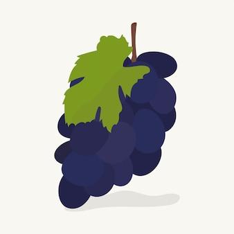 Mão, desenhado, uvas, fruta, ilustração