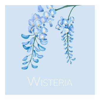 Mão, desenhado, wisteria, flor, ilustração