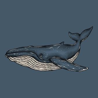 Mão desenhando ilustração vintage baleia azul