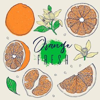 Mão desenhar conjunto fruta laranja.