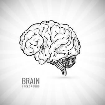 Mão desenhar esboço do cérebro humano