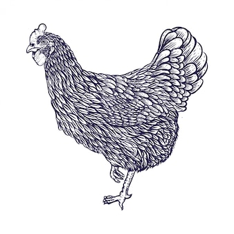 Mão, desenho, galinha, ilustração