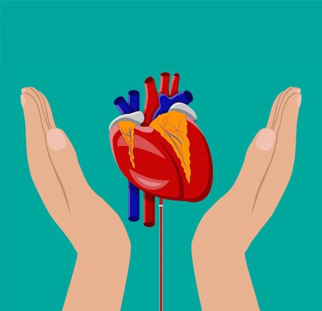 Mão do doador com coração