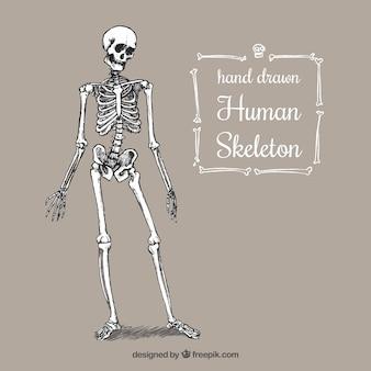 Mão esqueleto humano desenhada