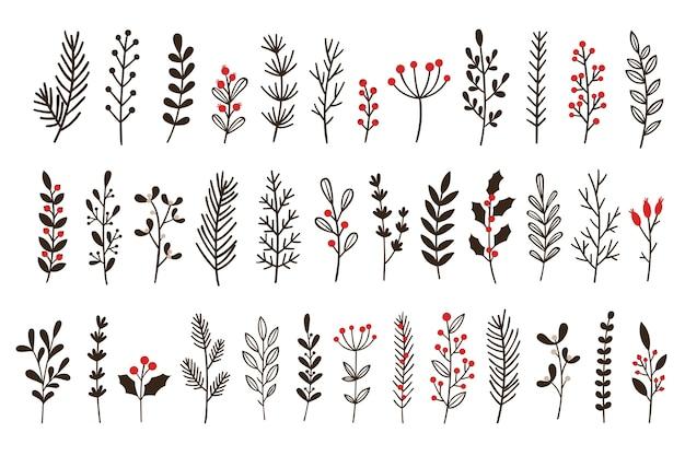 Mão-extraídas folhas e ramos de inverno. galho floral, ramo botânico com baga e folha doodle
