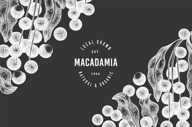 Mão-extraídas modelo de design de ramo e grãos de macadâmia. ilustração de alimentos orgânicos no quadro de giz. ilustração de porca vintage. estilo gravado botânico. Vetor Premium