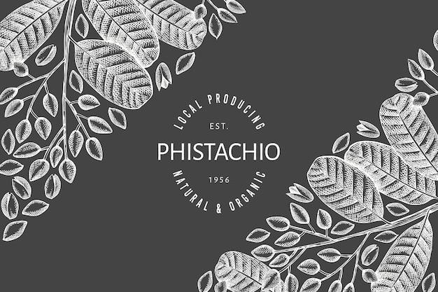Mão-extraídas modelo de design de ramo e grãos de phistachio. ilustração do vetor de alimentos orgânicos no quadro de giz. banner retrô porca.