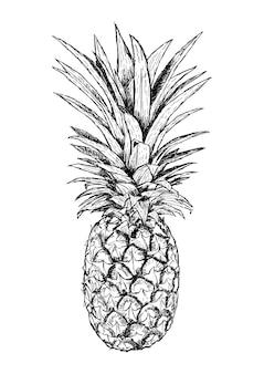 Mão ilustrações desenhadas de abacaxi. desenho realista de fruta. vetor isolado