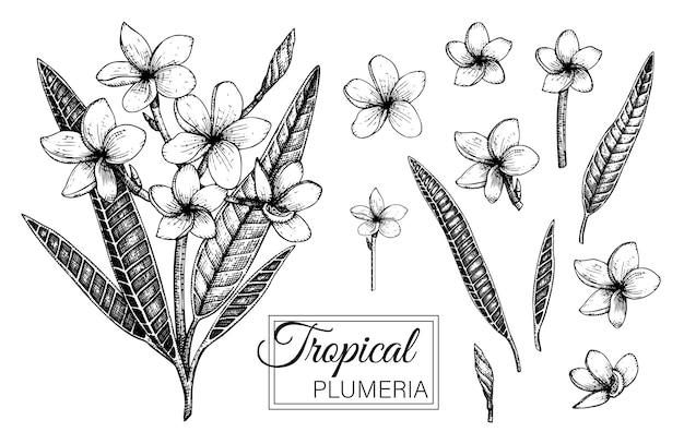 Mão ilustrações desenhadas de flores tropicais