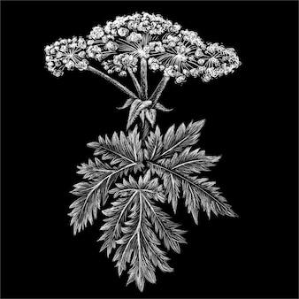 Mão ilustrações desenhadas no estilo de giz das plantas