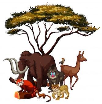 Mão isolada desenhada de animais africanos
