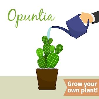 Mão, molhando, opuntia, planta