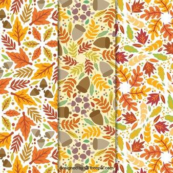 Mão outono elaborado deixa padrões decorativos