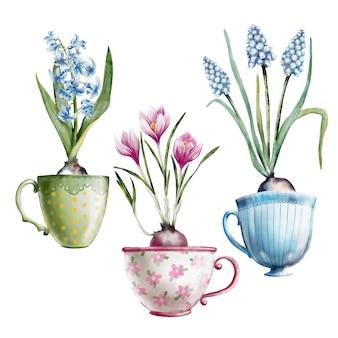 Mão pintada em aquarela conjunto de prímulas em xícaras de chá