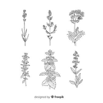 Mão realista desenhada flores e folhas coleção