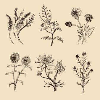 Mão realista extraídas coleção de flores botânica vintage