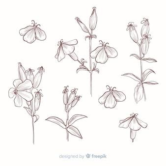 Mão realista extraídas coleção de flores botânicas em sépia