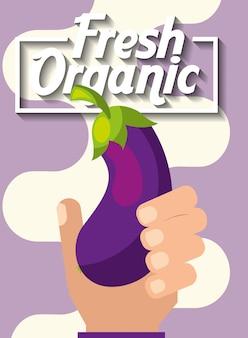 Mão segurando a berinjela orgânica fresca vegetal
