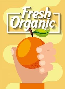Mão segurando a laranja frutas orgânicas