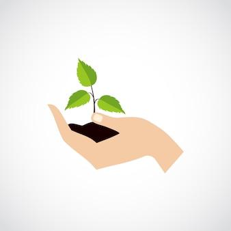 Mão segure proteja planta