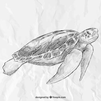 Mão tartaruga desenhada