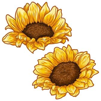 Mão tropical elegante desenhada flor sol floral