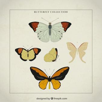 Mão variedade desenhada de borboletas do vintage