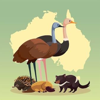 Mapa do continente australiano, fauna, fauna e ilustração da vida selvagem