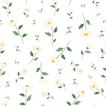 Margarida flores sem costura padrão