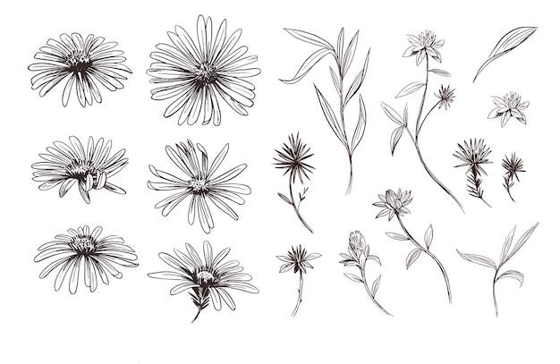 Margarida. sketch ilustração. conjunto de contorno de vetor.