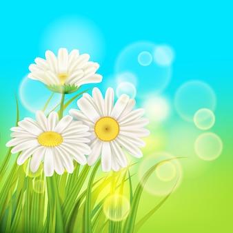 Margaridas de primavera fundo grama verde fresca, cores agradáveis suculentas da primavera
