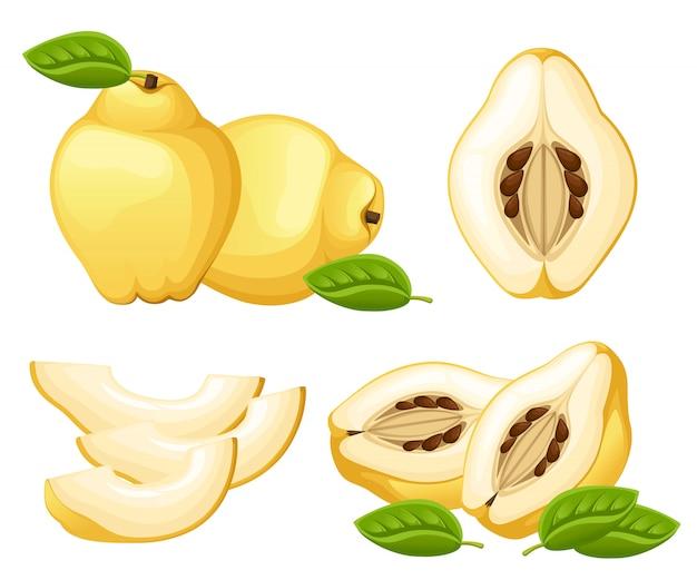 Marmelo com folhas inteiras e rodelas de marmelo. ilustração de marmelo. ilustração para cartaz decorativo, produto natural emblema, mercado dos fazendeiros. página do site e aplicativo para celular