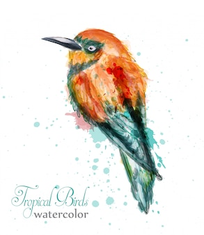 Martim-pescador ou abelha-comedor aquarela pássaro trópico