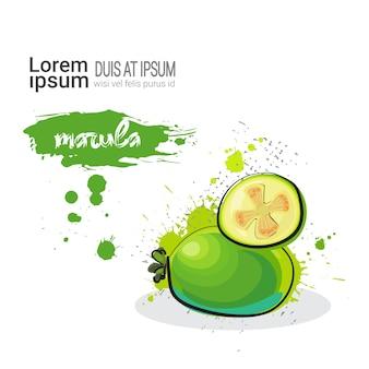 Marula hand drawn fruta aquarela