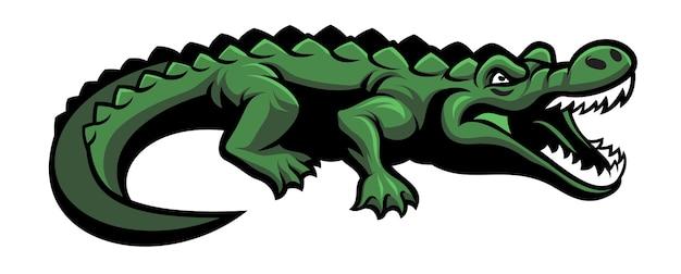 Mascote crocodilo verde isolado no branco