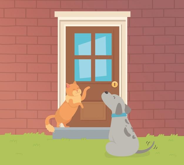 Mascotes bonitos do cão e do gato pequenos no jardim da casa