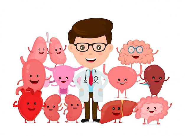 Médico com órgãos internos humanos