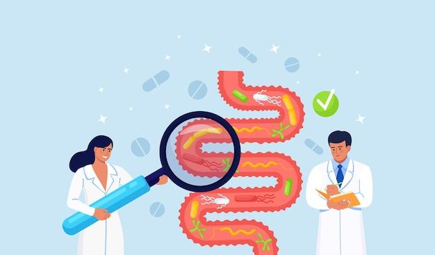 Médico examinando o trato gastrointestinal, intestino, sistema digestivo. o gastroenterologista inspeciona problemas no intestino ou no canal do intestino. inflamação intestinal. microrganismos intestinais e flora amigável