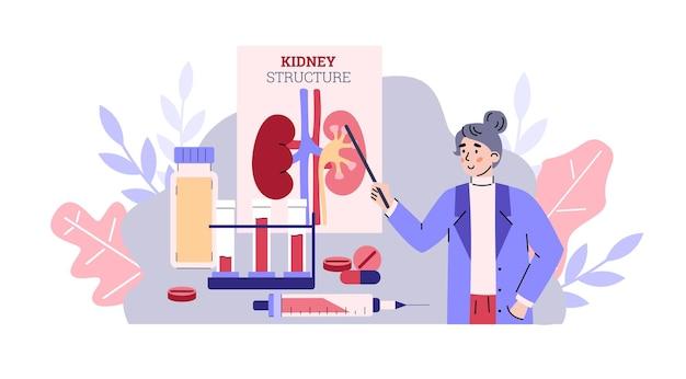 Médico explicando sobre ilustração em vetor desenho animado de estrutura de órgão renal