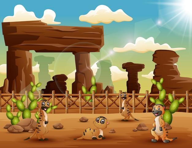 Meerkats dos desenhos animados que apreciam no deserto
